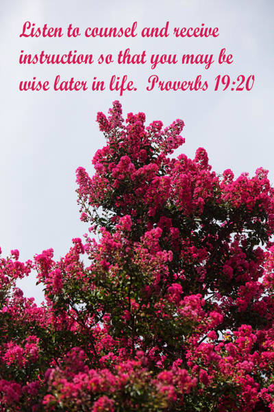 Proverb Photograph - Cherry Red Crape Myrtle Blossom Prov.19 by Linda Phelps