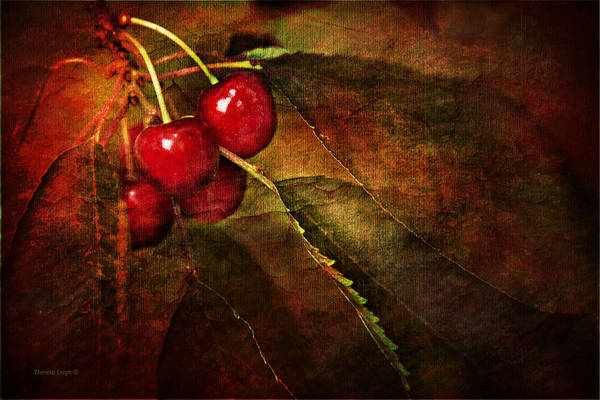 Cerise Photograph - Cherry Time by Theresa Tahara