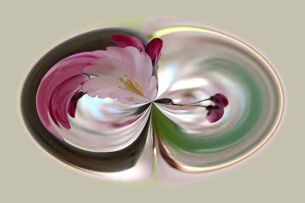 Photograph - Cherry Tree Blossom Series 802 by Jim Baker