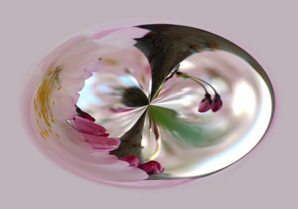 Photograph - Cherry Tree Blossom Series 804 by Jim Baker