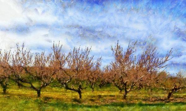 Wall Art - Digital Art - Cherry Trees With Blue Sky by Michelle Calkins