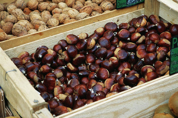 Foodstuff Photograph - Chestnuts by Antonia Reeve/science Photo Library