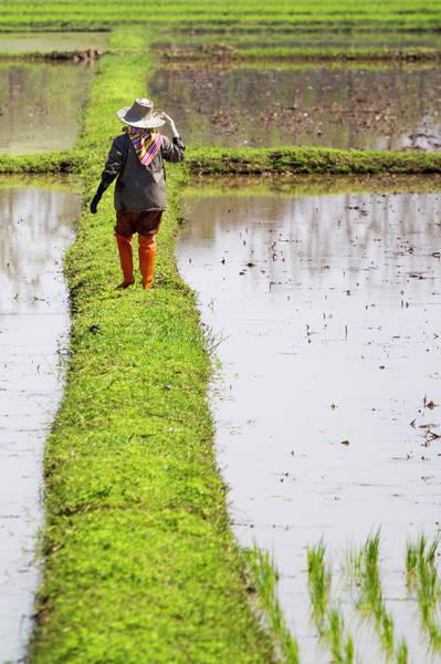 Sun Hat Photograph - Chiangrai_farmer On A Rice Field by Jean-claude Soboul