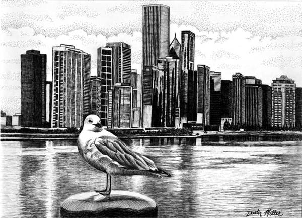 Drawing - Chicago Seagull by Dustin Miller