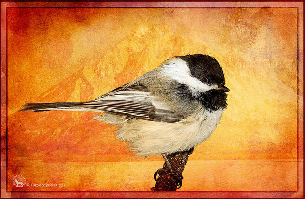 Pyrography - Chickadee by Fred Denner