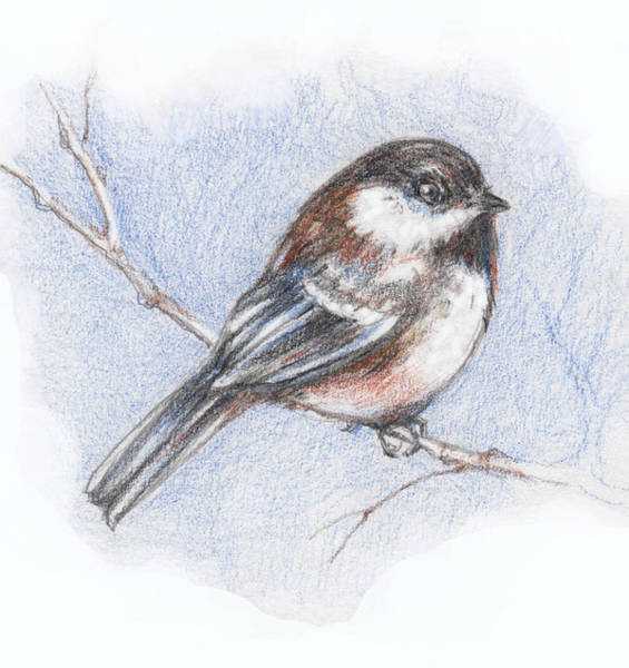 Colored Pencils Mixed Media - Chickadee In Winer  by Peggy Wilson