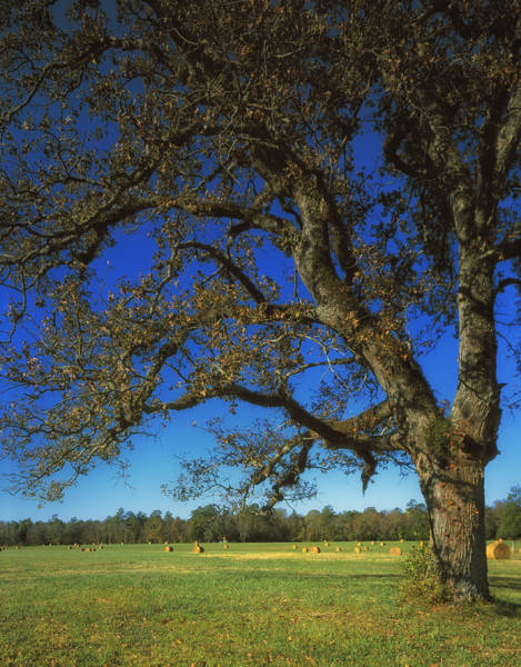 Between The Trees Photograph - Chickamauga Battlefield by Mountain Dreams