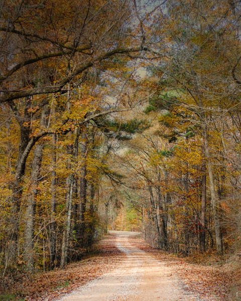 Photograph - Chickasaw Forest In Autumn 2 - Fall Landscape by Jai Johnson