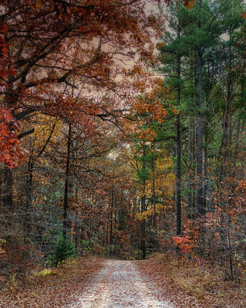 Photograph - Chickasaw Forest In Autumn - Fall Landscape by Jai Johnson