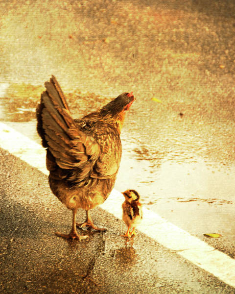Photograph - Chicken And Baby Chick Crosses Road by ©debbie Prediger Photography
