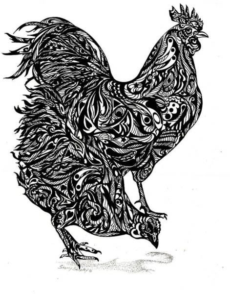 Drawing - Chicken Feathers by Sherry Shipley