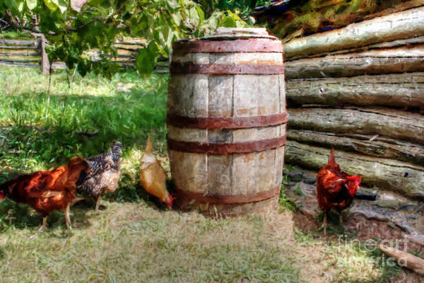 Photograph - Chicken In A Barrel by Doc Braham