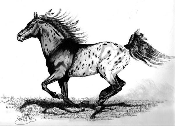 Appaloosa Drawing - Chiefton by Cheryl Poland