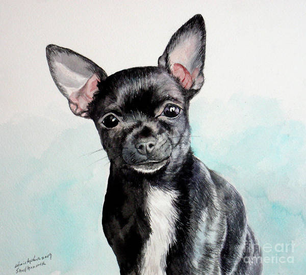 Painting - Chihuahua Black by Christopher Shellhammer