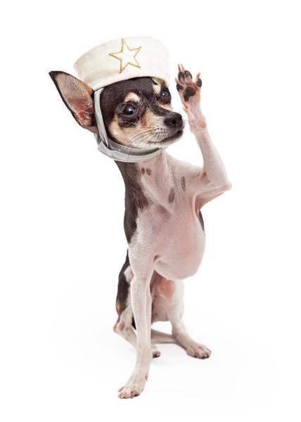 Black Cap Photograph - Chihuahua Sailor Dog Saluting by Susan Schmitz