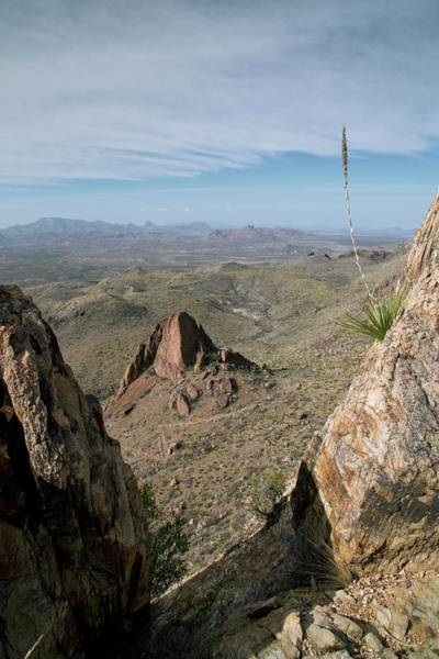 Chisos Mountains Photograph - Chihuahuan Desert by Bob Gibbons/science Photo Library