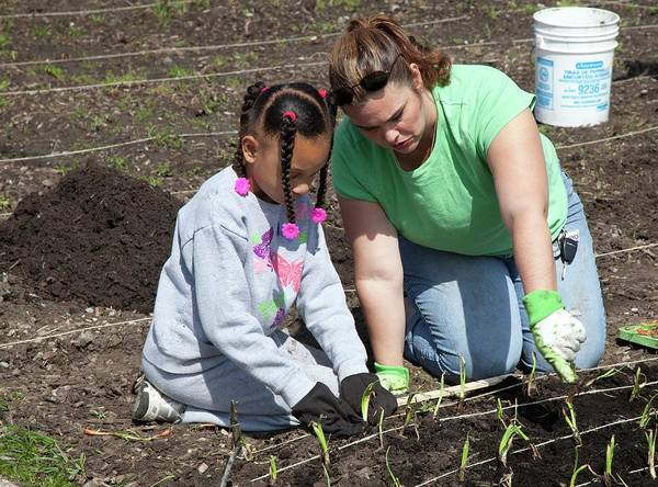 African Daisies Photograph - Child And Adult Planting Onions by Jim West