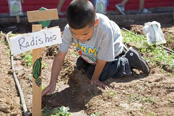 Non Profit Photograph - Child Learning Organic Gardening by Jim West