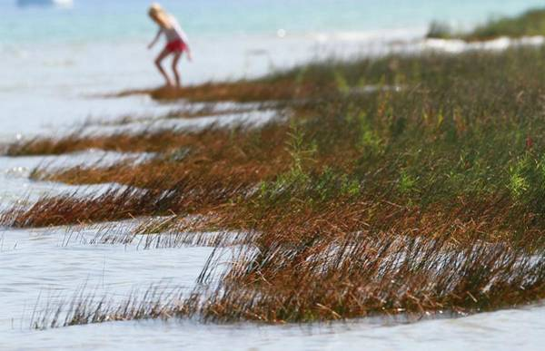 Photograph - Child Playing On The Beach Mackinaw City by Dan Sproul