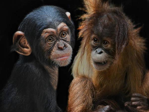 Monkey Photograph - Children Of The Evolution by Joachim G Pinkawa