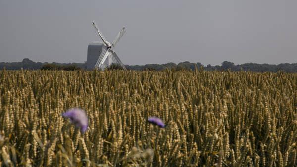 Wall Art - Photograph - Chillenden Windmill by Nigel Jones