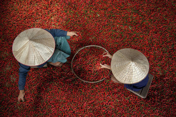 Pick Photograph - Chilli by Sarawut Intarob