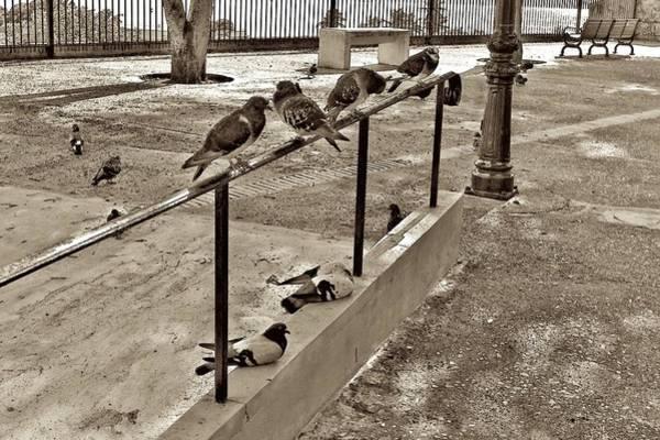Photograph - Chillin' Pigeons by Ricardo J Ruiz de Porras
