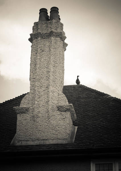 Photograph - Chimney Visitor by Ross Henton