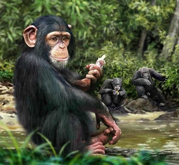 Chimpanzee Art Print by Owen Bell