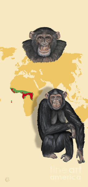 Painting - Chimpanzee Pan Troglodytes Shrinking Habitats - Zoo Interpretive Panels - Great Apes - Schautafeln by Urft Valley Art