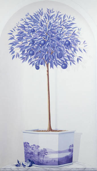 Willow Photograph - China Blue Tree Set In A Niche by Lincoln Seligman