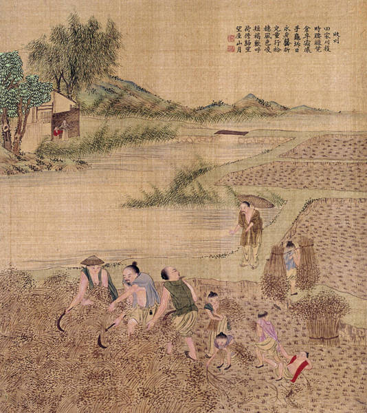 Painting - China Harvesting Rice by Granger