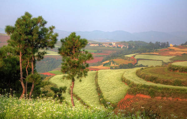 Canola Wall Art - Photograph - China,kunming Dongchuan Red Land Area by Darrell Gulin