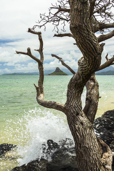 Mokolii Photograph - Chinaman's Hat 4 by Leigh Anne Meeks