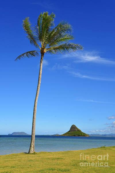 Mokolii Photograph - Chinamans Hat And A Lone Palm Tree by Aloha Art