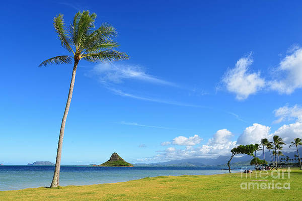 Mokolii Photograph - Chinamans Hat And A Lone Palm Tree Wide by Aloha Art