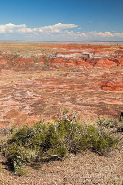 Photograph - Chinde Point Painted Desert Petrified Forest National Park by Fred Stearns