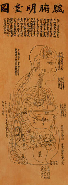 Wall Art - Photograph - Chinese Acupuncture Chart Showing Internal Organs by Mark De Fraeye/science Photo Library