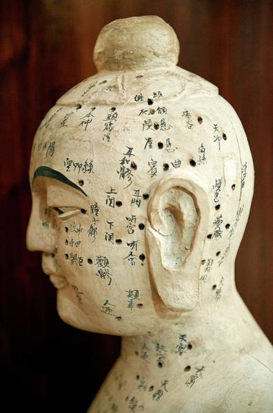 Traditional Chinese Medicine Wall Art - Photograph - Chinese Acupuncture Model by John Greim/science Photo Library
