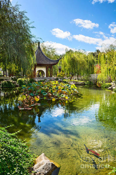 Chinese Pavilion Photograph - Chinese Garden Lake by Jamie Pham
