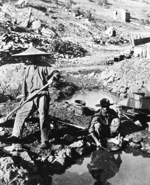 Coolie Photograph - Chinese Gold Miners, C1850 by Granger