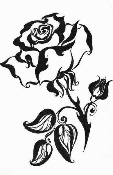 Drawing - Chinese Rose by Jenny Rainbow