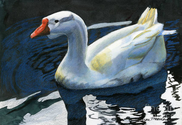 Bird Watercolor Mixed Media - Chinese Waterfowl by Sharon Freeman