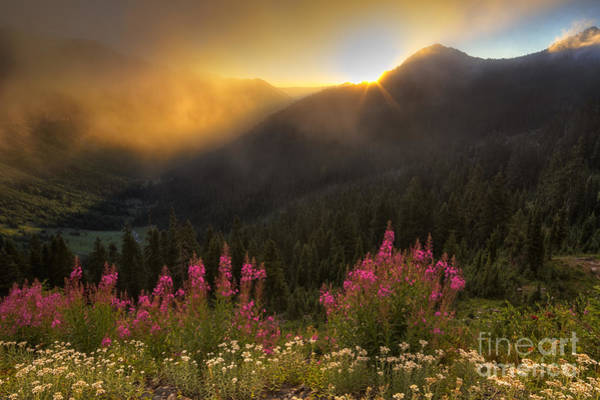 Fireweed Photograph - Chinook Pass Sunrise II by Mark Kiver