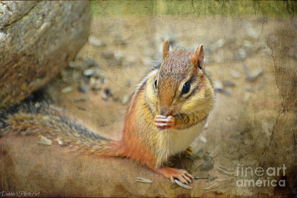 Munk Wall Art - Photograph - Chipmonk by Debbie Portwood