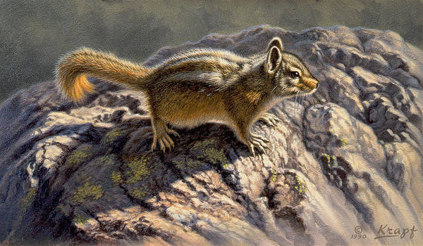Chipmunk Wall Art - Painting - Chippy On The Rocks by Paul Krapf