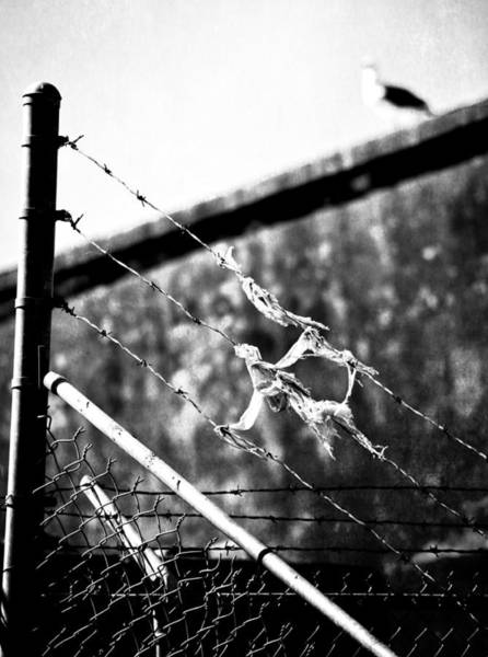 Chain Link Photograph - Chirping Sins by The Artist Project