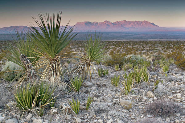 Chisos Mountains Photograph - Chisos Mountains In Distance Seen From by Witold Skrypczak