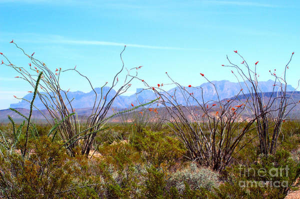 Chisos Mountains Photograph - Chisos Mountains With Ocotillo by Gregory G. Dimijian, M.D.