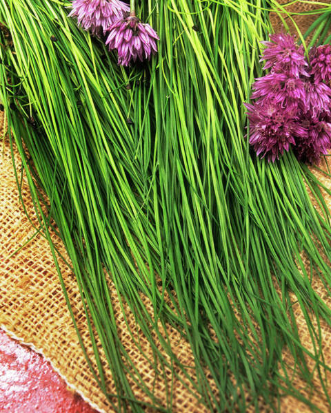 Chive Photograph - Chives by Ray Lacey/science Photo Library